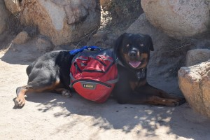 Seven on July 4, 2015 at Iron Mountain peak under shade as usual