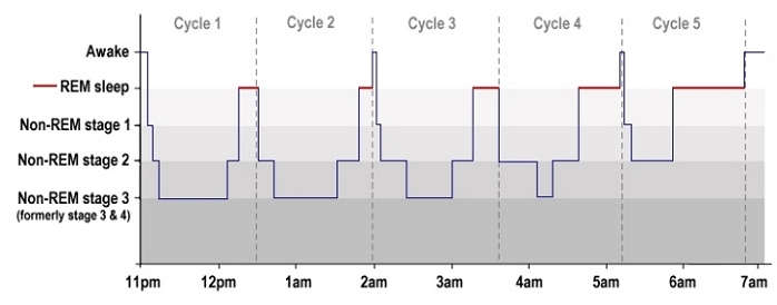 normal sleep diagram ldquo what are rem and non rem sleep rdquo from webmd com renchan sleep diagram chart